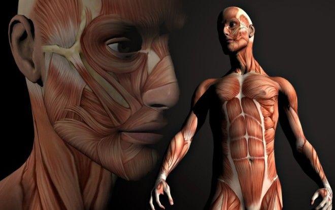 Как часто обновляется наш организм