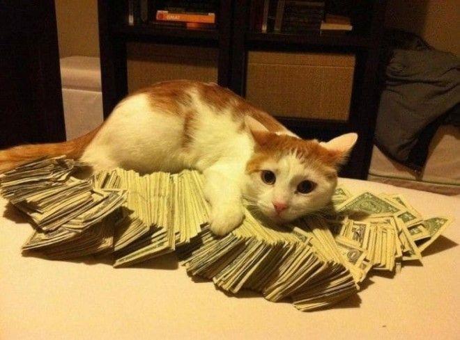 Просто интересно сколько жизней ушло у котяры чтобы намутить такие деньжищи богатые люди мира деньги развлечения
