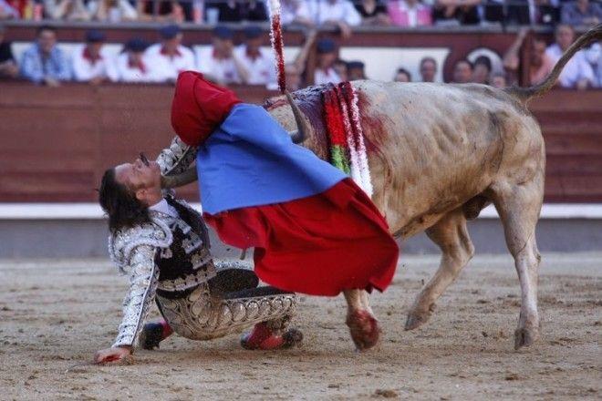 15 Испанский матадор Хулио Апарисио был проткнут быком а в 2016 году бык в прямом эфире убил впервые за 30 лет знаменитости спорт спортсмены страшно фото