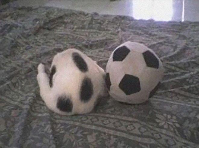 Кот и мяч главное не перепутать