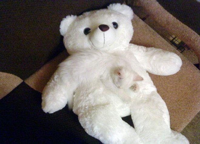 С любимым плюшевым медведем