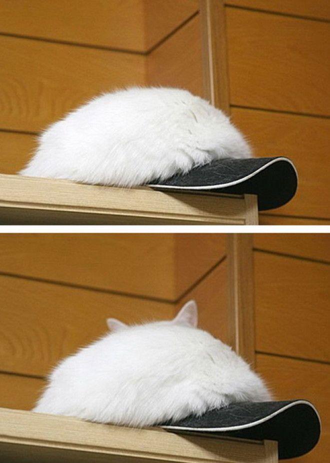 Я шапка а вовсе не кот