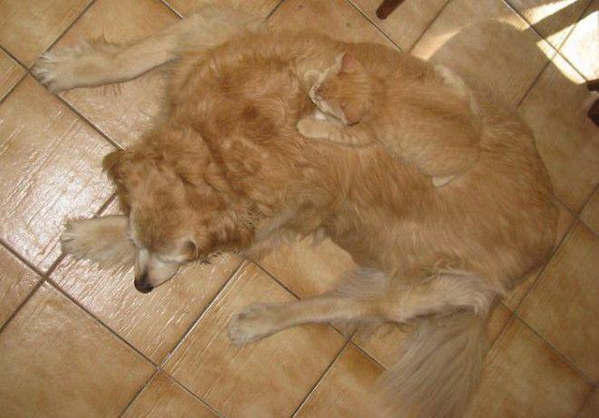 Кот и собака напарники в маскировке