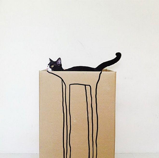Картонные коробки любимое место котов