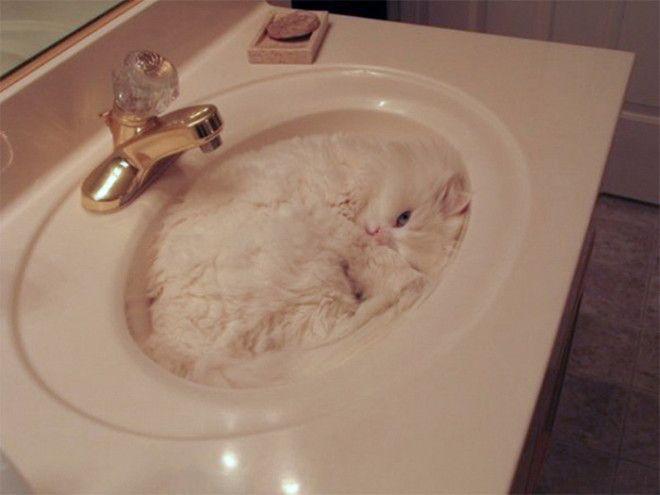 Коты обожают заполнять собой пустоту Даже в раковине