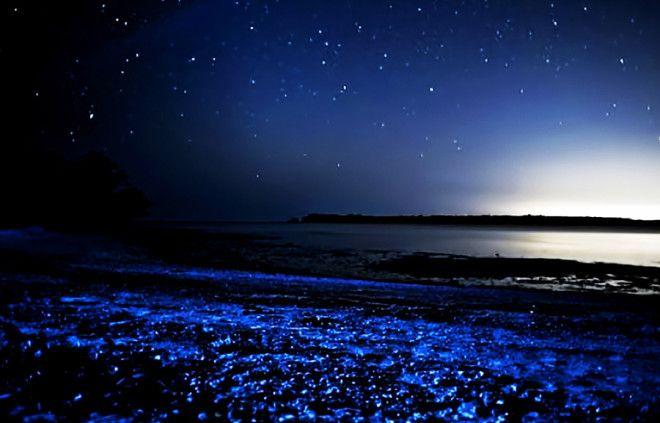 Ла Паргуэра Ладжас ПуэртоРико В ПуэртоРико насчитывается целых три биолюминесцентных залива Один из них Ла Паргуэра Лучшим временем для посещения является период размножения планктона когда все вокруг окрашивается в голубые тона