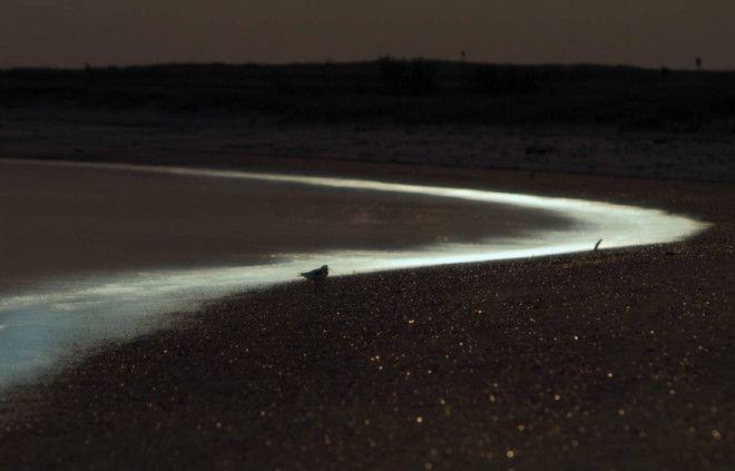 ВосточноФризские острова Германия Ночью вода вблизи берега у ВосточноФризских островов переливается синезеленым свечением испускаемым светящимся планктоном