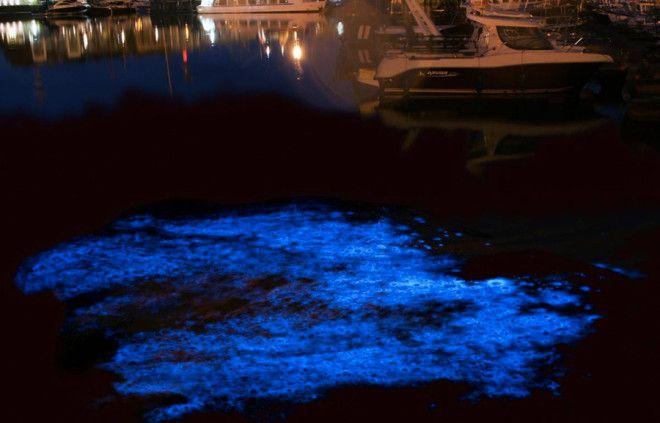 Морской порт Зебрюгге Бельгия Дополнительной подсветкой может похвастаться и порт Зебрюгге В темное время суток планктон окрашивает воду у причалов в голубой цвет
