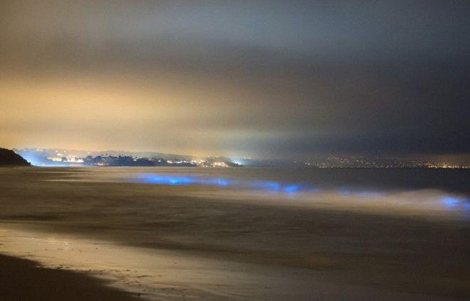 Карлсбад штат Калифорния США Неоновые синие волны можно наблюдать и у пляжей Калифорнии В определенный период у берега скапливается фитопланктон При движении волн когда волна накатывает на берег образуется свечение