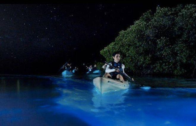 Залив Москито Вьекес ПуэртоРико Это самое популярное в ПуэртоРико место в которое приезжают посмотреть на свечение планктона Местный планктон считается самым ярким До залива обычно добираются на каяках