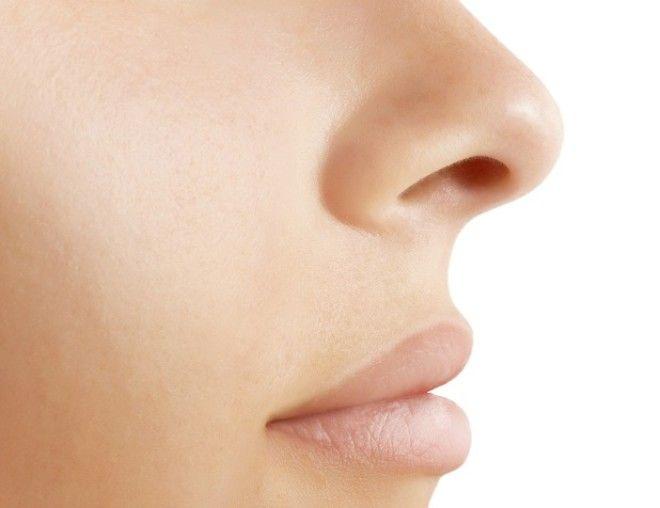 SЗачем у носа две ноздри