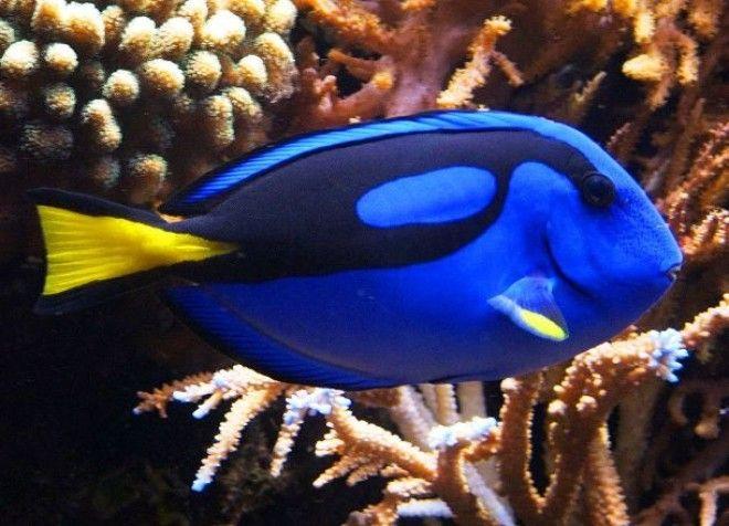 Невиданные ранее морские существа