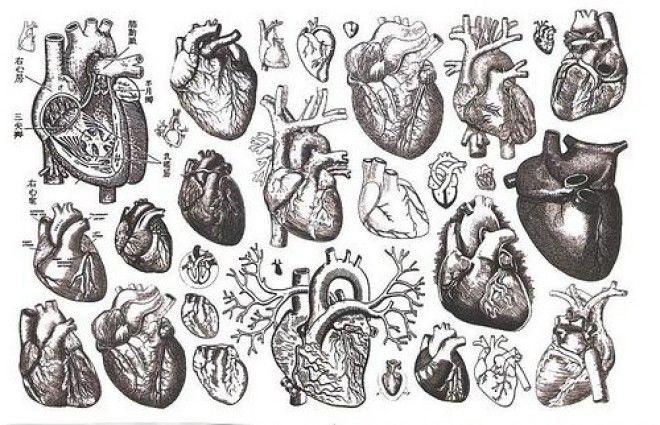 Картинки по запросу сердце человека арт