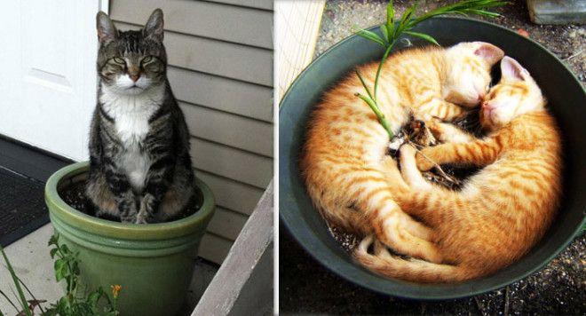 Картинки по запросу кот в горшке