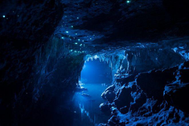 etoj peshchere v novoj zelandii 30 millionov let 14