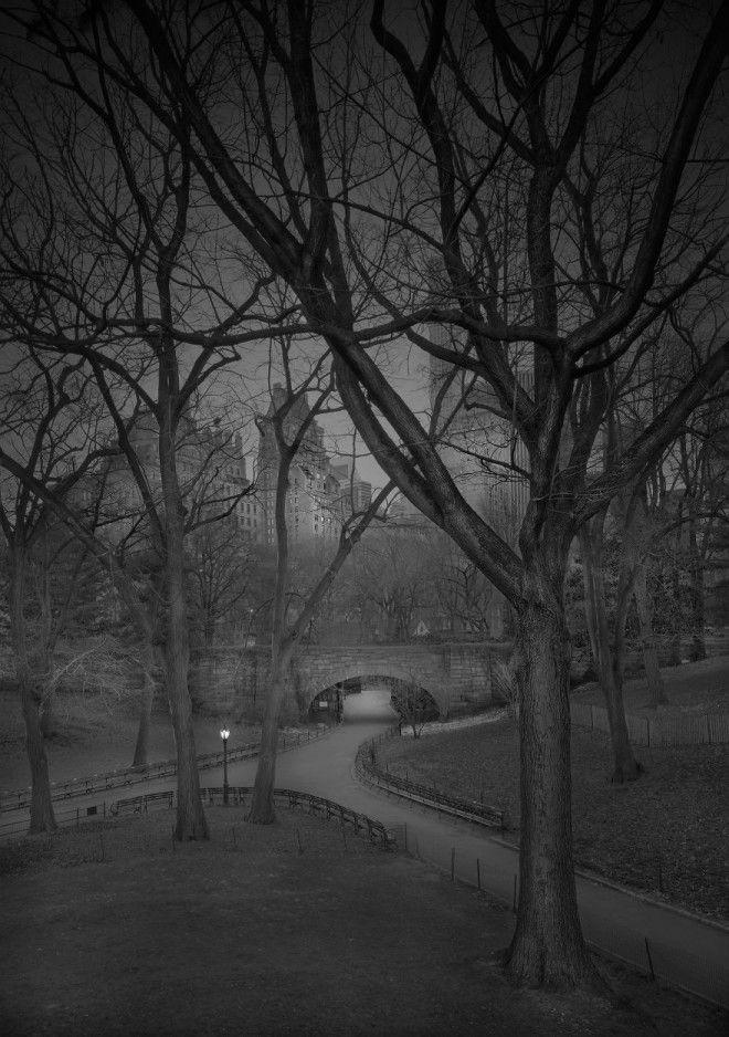 «В глубоком сне»: Центральный парк в фотографиях Майкл Массайа 11