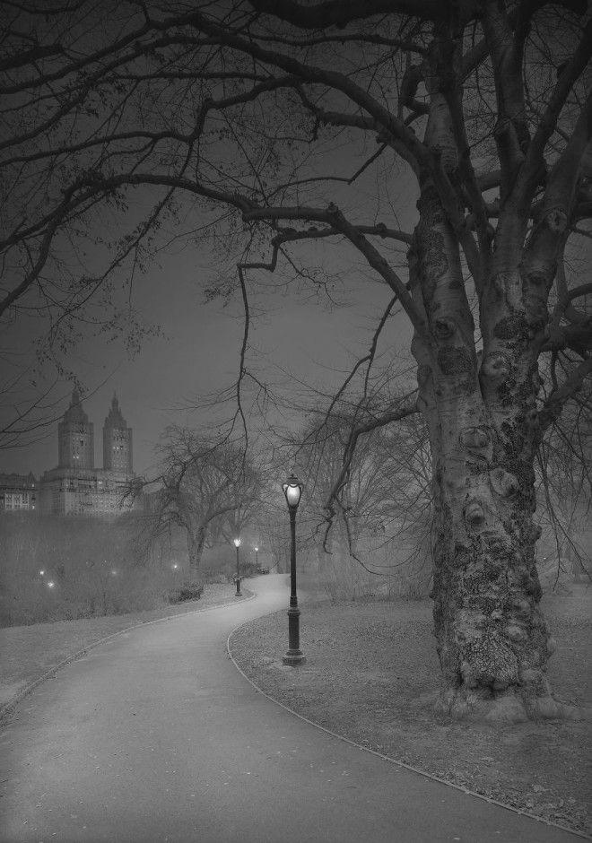 «В глубоком сне»: Центральный парк в фотографиях Майкл Массайа 12