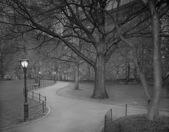 «В глубоком сне»: Центральный парк в фотографиях Майкл Массайа 13