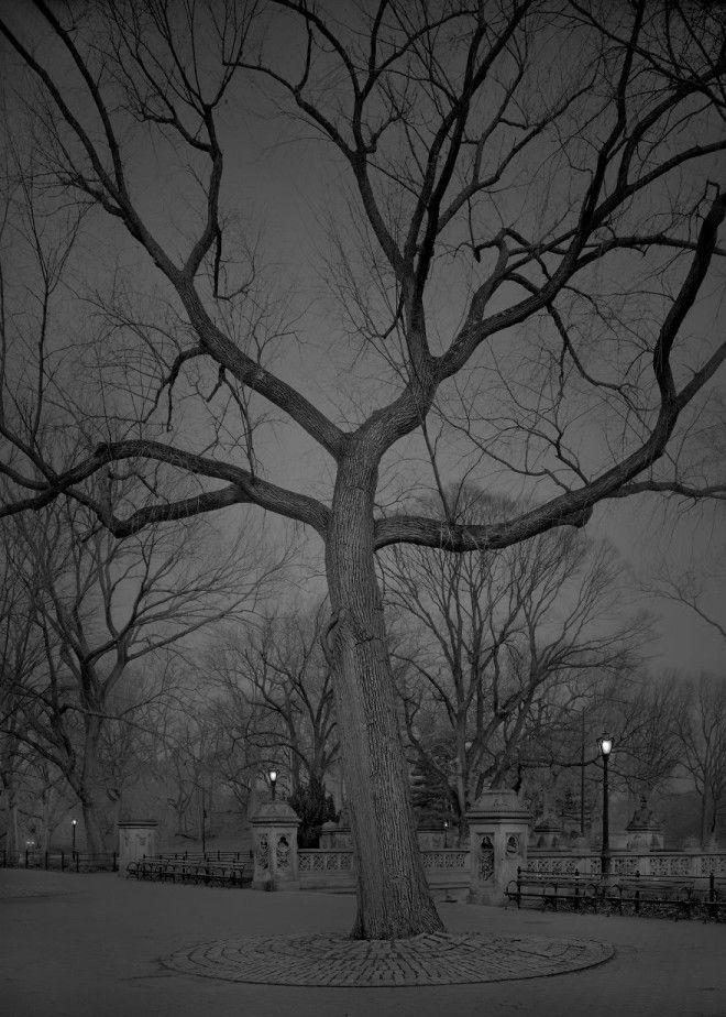«В глубоком сне»: Центральный парк в фотографиях Майкл Массайа 23