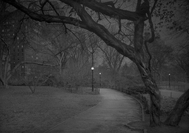 «В глубоком сне»: Центральный парк в фотографиях Майкл Массайа 24