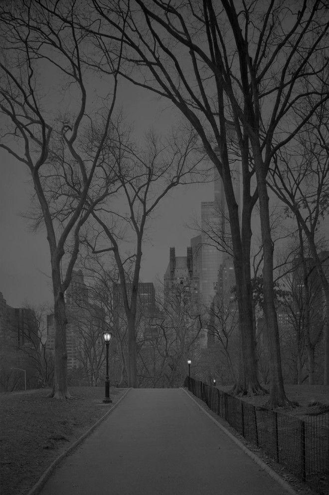 «В глубоком сне»: Центральный парк в фотографиях Майкл Массайа 26