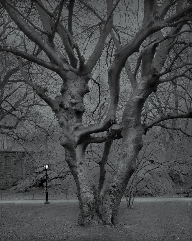 «В глубоком сне»: Центральный парк в фотографиях Майкл Массайа 29