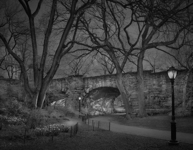 «В глубоком сне»: Центральный парк в фотографиях Майкл Массайа 2