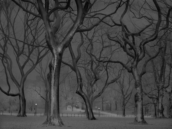 «В глубоком сне»: Центральный парк в фотографиях Майкл Массайа 34