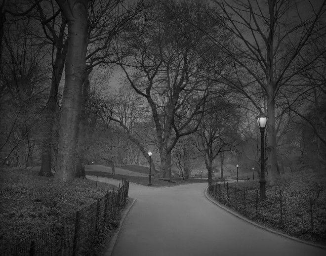 «В глубоком сне»: Центральный парк в фотографиях Майкл Массайа 5