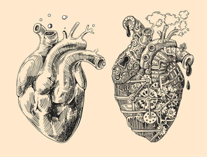 Картинки по запросу desenho de corao humano