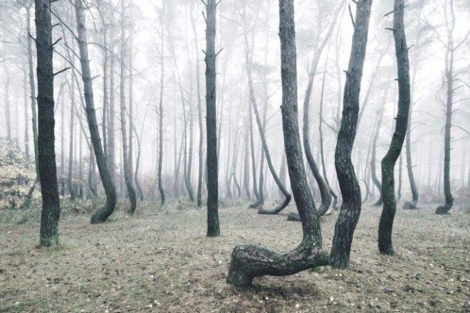 SКто же такое сотворил с деревьями