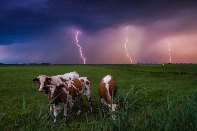 Niderlandy fotograf Albert Dros 15