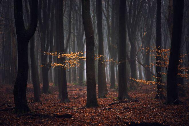 Niderlandy fotograf Albert Dros 17