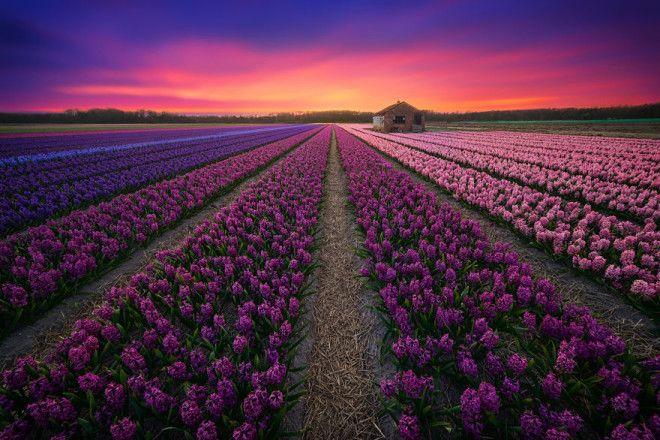 Niderlandy fotograf Albert Dros 1
