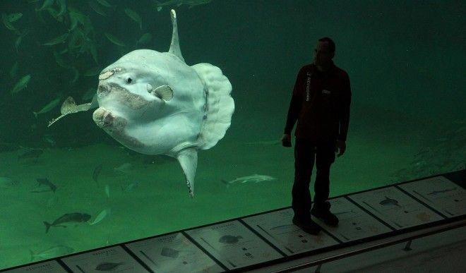 Картинки по запросу nordsen oceanarium denmark