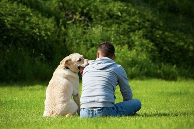 LОтцы семейства которые запрещали заводить дома собаку