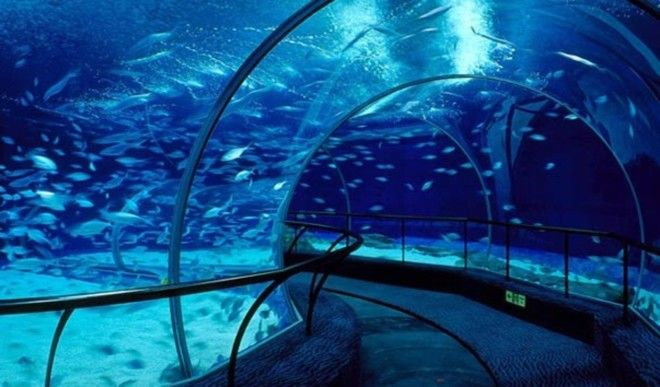 Картинки по запросу Шанхайский океанариум