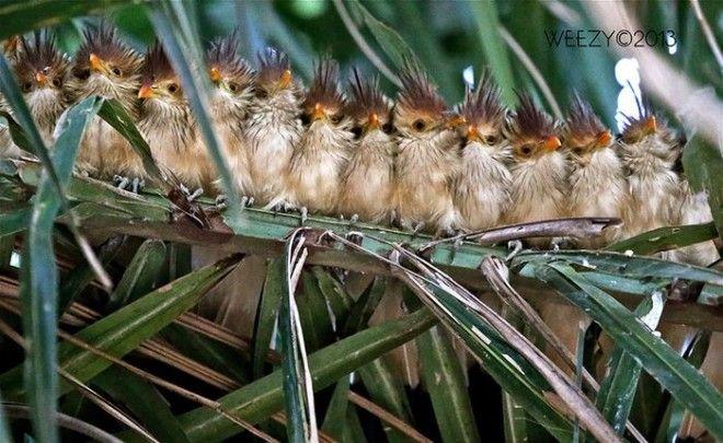 птицы любят обниматься