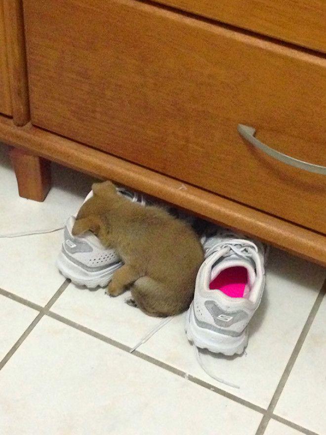 B30 щенков которые могут уснуть где угодно и как угодно