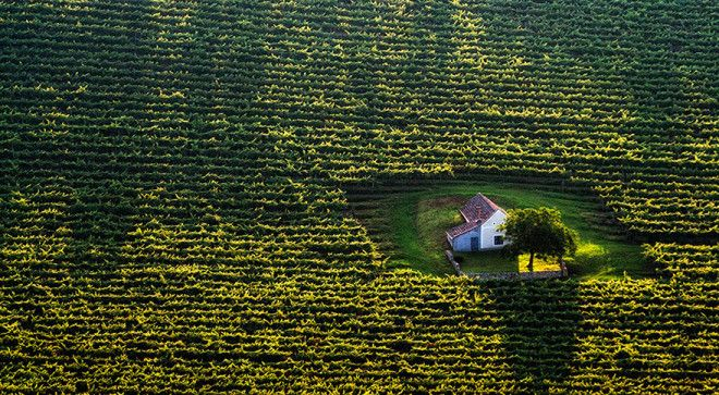 Tiny House In The Fields Hungary