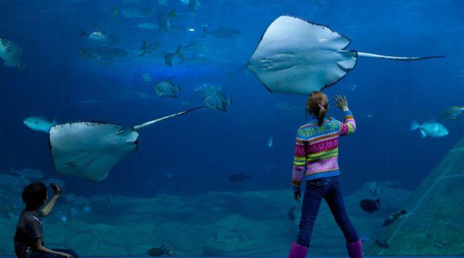 Аквариум Барселона Барселона Испания Подводный тоннель этого океанариума считается одним из самых интересных в мире Здесь посетители могут наблюдать за жизнью тысяч морских созданий в том числе и за акулами