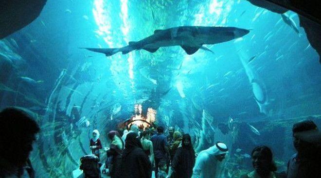 Дубайский аквариум Дубай Пожалуй этот океанариум вполне может считаться самым необычным во всем мире Чтобы полюбоваться морскими созданиями посетителям придется подняться на третий этаж гигантского торгового центра Dubai Mall Резервуар океанариума вмещает целых 10 миллионов литров воды и 33 000 подводных обитателей