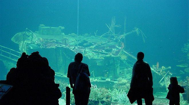 Лиссабонский океанариум Лиссабон Португалия Лиссабонский океанариум расположенный в столице Португалии является одним из крупнейших аквариумов в Европе 15 000 подводных созданий из 450 видов разделены по нескольким экосистемам