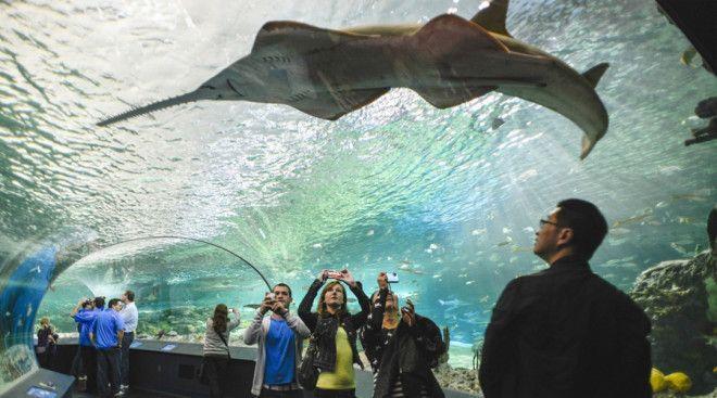 Риплиский аквариум Канады Торонто Канада В аквапарке Ripleys Canada расположенном в самом центре Торонто есть как морские так и пресноводные экспонаты