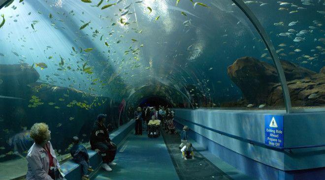Национальный морской аквариум Плимут Великобритания Это крупнейший и самый интересный аквариум Великобритании Он разделен на 4 зоны где живут морские животные различных ареалов обитания