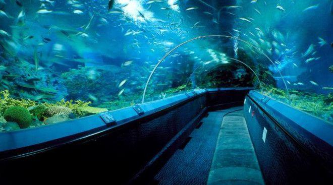 Аквариум МонтеррейБей Монтерей Калифорния В калифорнийском аквариуме посетители могут переходить между двух огромных подводных экосистем выстроенных с большим тщанием Кроме того здесь постоянно экспонируют несколько уникальных видов рыб