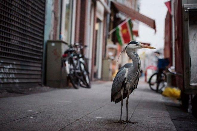 Животные в городах