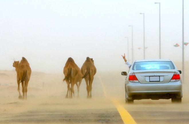 Необычные правила дорожного движения разных стран мира