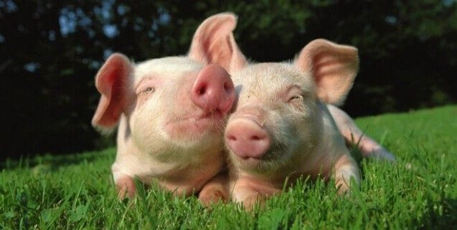 Картинки по запросу vegetarian save animal