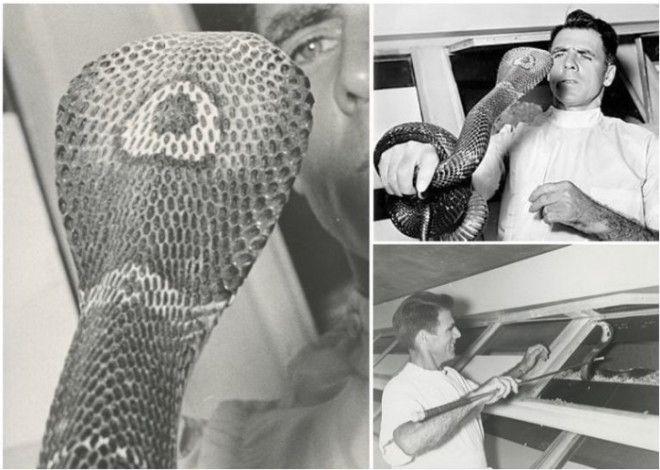 История жизни американца, перенесшего более 170 укусов змей